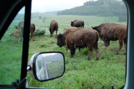 bisonoutsidevan