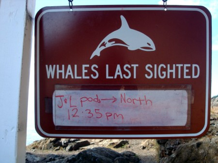 whaleslastsighted
