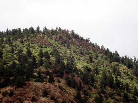 sheephill