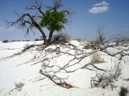 whitesandsforest